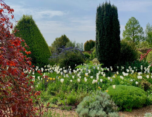 The gravel gardens are stirring with spring colour…