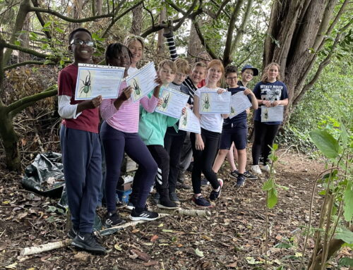 Bug hotels and wildlife